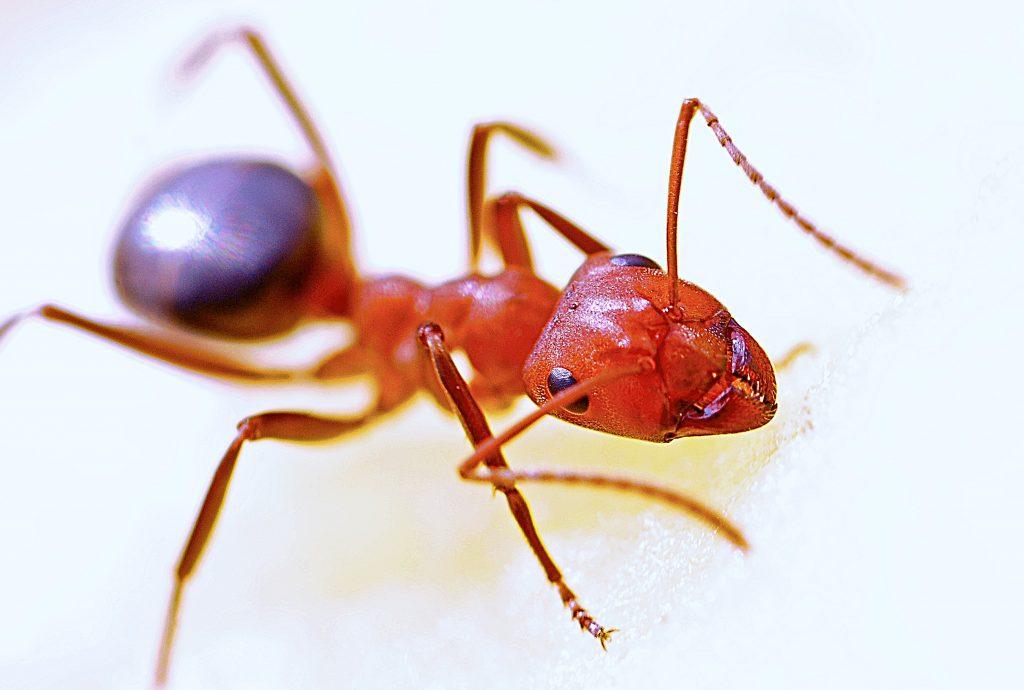 Myrer FAQ