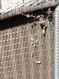 Edderkoppespind på havemøbel