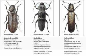 Træødelæggende biller