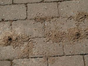 Myrebo i fliser