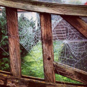 Edderkoppe spind